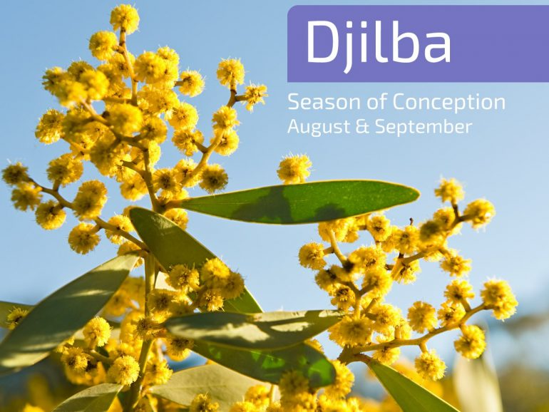 New Season: Djilba